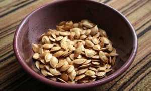 Процесс замачивания семян кабачков перед посадкой