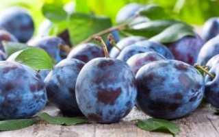 Препараты и сроки питания сливы осенью