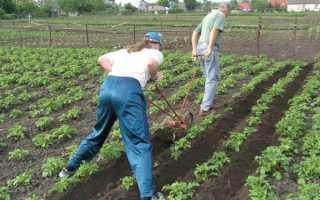Методы окучивания картофеля