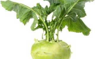 Польза и вред капусты Кольраби