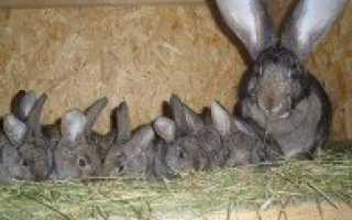 Кролик не прячется и что делать