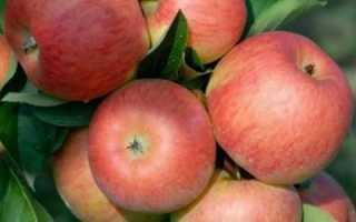 Яблоневый топаз: описание сорта и характеристика