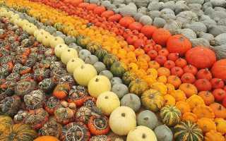 Сорта кустовой тыквы: выращивание и уход в земле, фото и описание ухода, как сформировать и обрезать