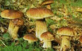 О пользе и вреде грибов