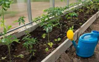 Как правильно поливать томаты в теплице