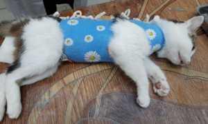 Как ведут себя кошки после стерилизации: наблюдения, отзывы