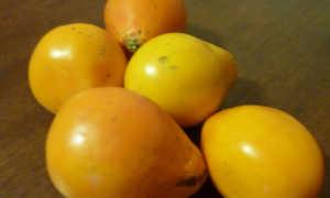 Томат трюфель желтый: отзывы садоводов, характеристика и описание сорта, выращивание