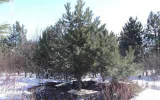 Зимняя посадка деревьев