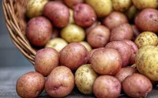 Как выбрать сидераты для картофеля