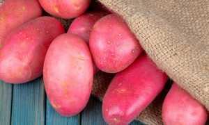 Характеристика цен на картофель в 2020 году
