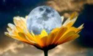 Цветочный гороскоп – познакомиться с вашим цветочным знаком зодиака