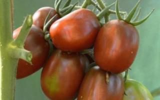 Характеристика томатов сорта Черный Мавр