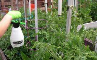 Применение марганцовки для помидоров