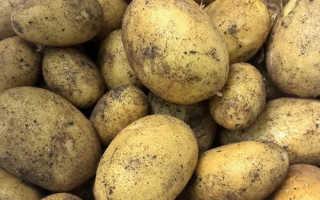 Описание картофеля Колетте