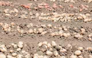 Картофелекопалка с мотоблоком Нева
