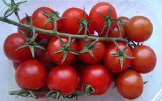 Помидоры Монисто: характеристика и описание сорта, обзор урожайности, фото