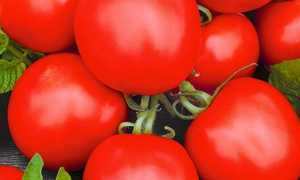 Томат аргонавт: описание сорта, фото, отзывы, урожайность