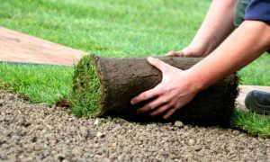 Создание газона по всем правилам