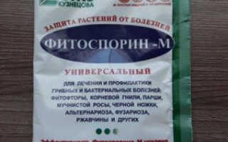 Как использовать фитоспорин для обработки огурцов