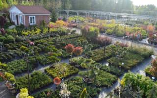 Питомник растений или садовый центр: за и против