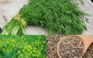 Семена фенхеля при панкреатите: есть ли фенхель при этом заболевании, как использовать семена в рецептах народной медицины