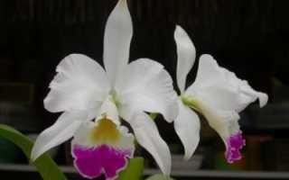 Особенности выращивания орхидеи и ухода за ней