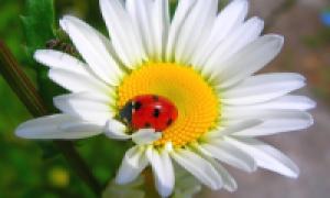 Удобрения в саду: как выбрать и применить правильное удобрение – предмет от пользователя Obi Club