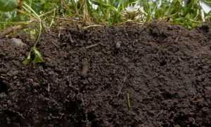 Роль почвы в выращивании растений