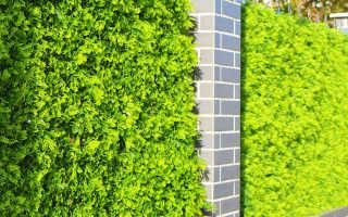Озеленение заборов