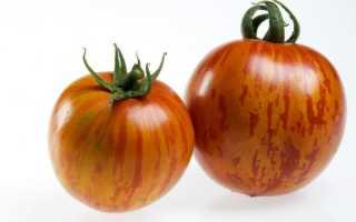 Томат Дон Жуан: описание сорта, фото, отзывы, характеристика, урожайность