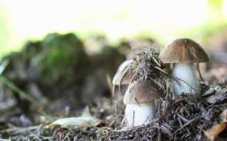Характеристика грибов Средней полосы России