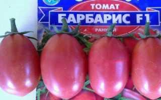 Берберский гибрид томатов: фото томатов и отзывы о их выращивании, практическое руководство по уходу за сортом