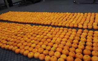 Описание мандарина