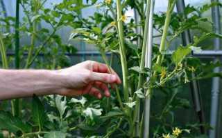 Как нужно правильно пасынковать помидоры в теплице