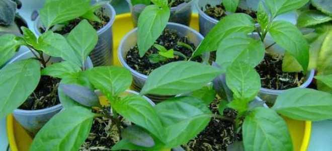 5 лучших стимуляторов роста перца и ростков помидоров: как ускорить