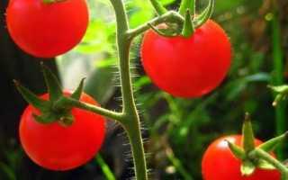 Самые популярные сорта помидоров черри