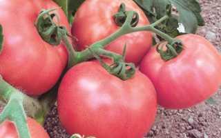 Сорта розовых помидор, посадка и уход