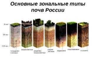 Основные типы почв средней полосы России
