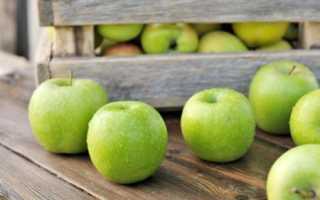 Зеленые яблоки – лучшие сорта зеленых яблок с названиями и фото (каталог)