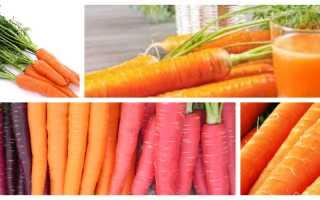Польза и вред моркови для людей