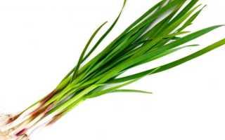 Польза и вред зеленого чеснока