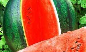 Мы расскажем, как сохранить арбуз до Нового года в погребе: сколько хранятся ягоды, способы хранения, как правильно хранить арбузы на зиму
