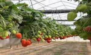 Выращивание овощей в теплице круглый год: важные условия и совместимость культур