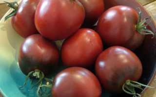 Томат Захер: сортовая характеристика и описание, урожайность, фото, отзывы