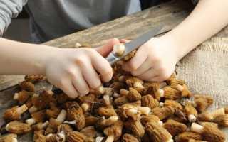 Правила чистки грибов