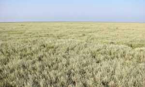 В каких местах растет трава полынь