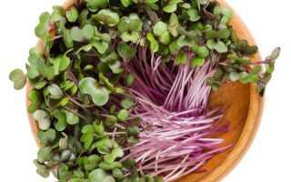 Как вырастить рассаду краснокочанной капусты