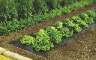 Как выбрать мульчирующую пленку для почвы
