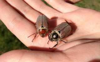 Борьба с майским жуком