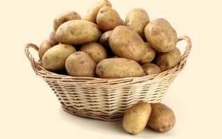 Описание картофеля Ассоль